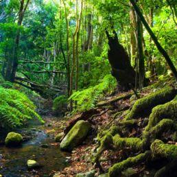 El Cedro Parque Nacional de Garajonay